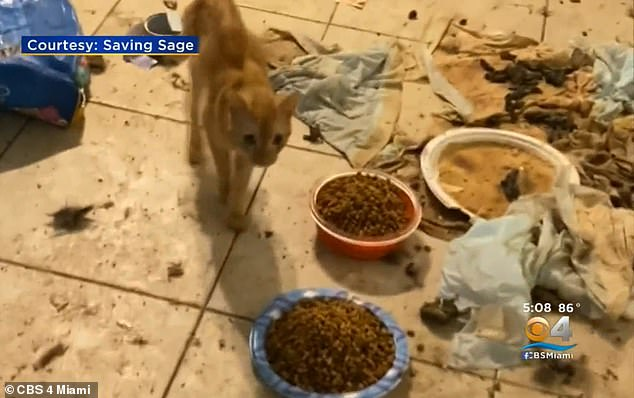 She abandoned the felines before the cats were found in her home by police. Toulouse - who could face felony charges for animal abuse - left the cats sitting in their own filth. Police found the animals with urine in their water bowls and feces on the floors and counters