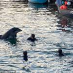 Tragedy as Nick the lonely bottlenose dolphin dies after being hit by a boat 💥👩💥