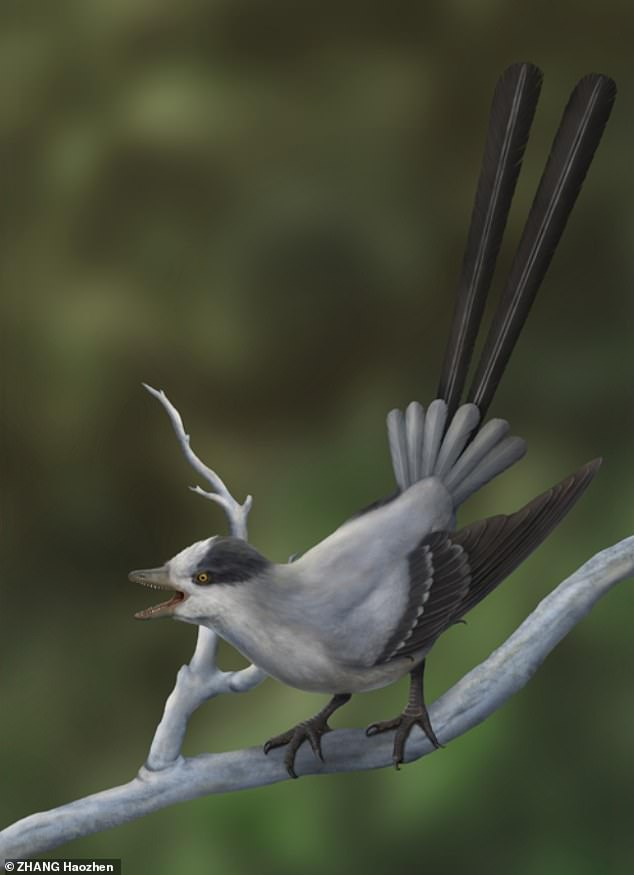 Artist's impression of the Mesozoic bird Yuanchuavis kompasaura, as it may have appeared 120 million years ago.  Researchers named it Yuanchuawis after Yuanchu, a bird from Chinese mythology.  At its base was a fan of short wings and then two extremely long wings.