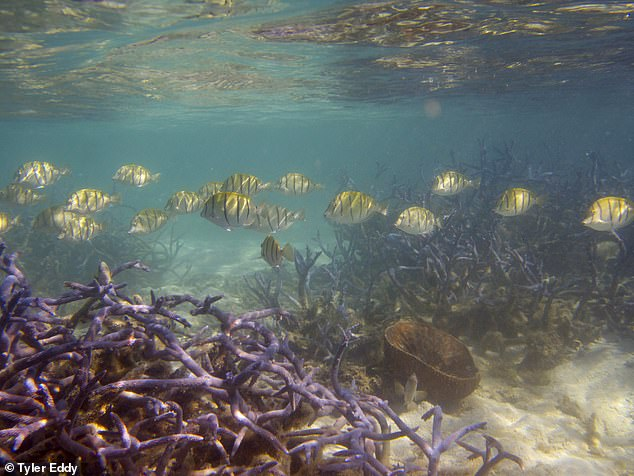 Climate change, overfishing, pollution and other human impacts have reduced the size of coral reefs by more than half since the 1950s, a study finds.