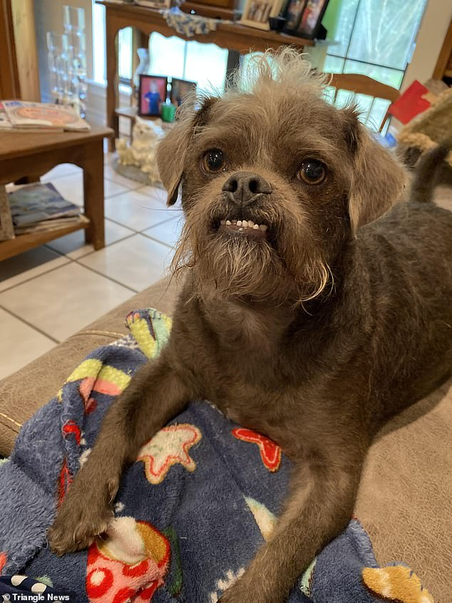 Dr. Handsome was adopted from a shelter by Amber West, 32, from Mississippi and her partner Jordan. He was originally called Tibbi, but they decided his new name was more fitting