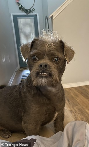 The canine, who has a unique face, was described by the shelter as apug cross, but the couple are sure he has some Brussels Griffon in him