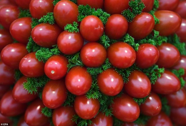 Take your pick! Tantalising cherry tomatoes were beautifully displayed into round bushes at the show/s press day ahead of its opening tomorrow