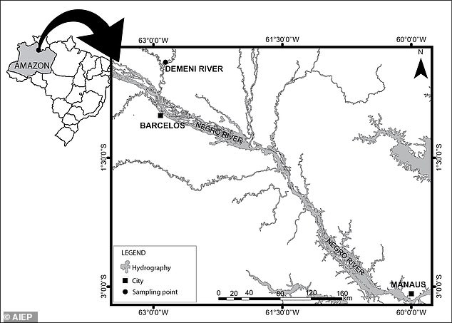 The researchers surveyed and collected fish species in the Rio Negro, a major tributary of the Amazon, during their discovery.