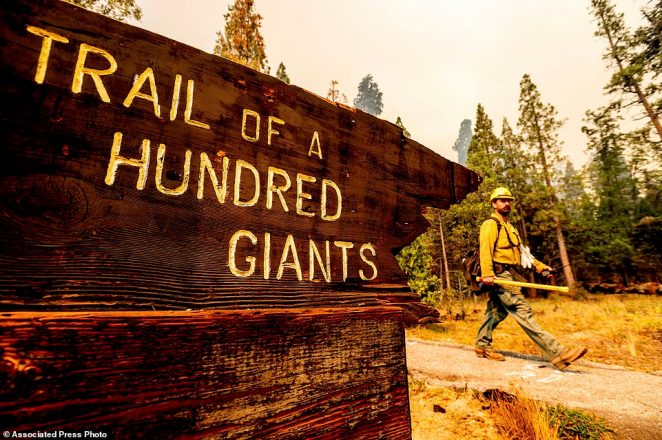 Flames scorched at least two sequoia trees as firefighters worked to defend the grove