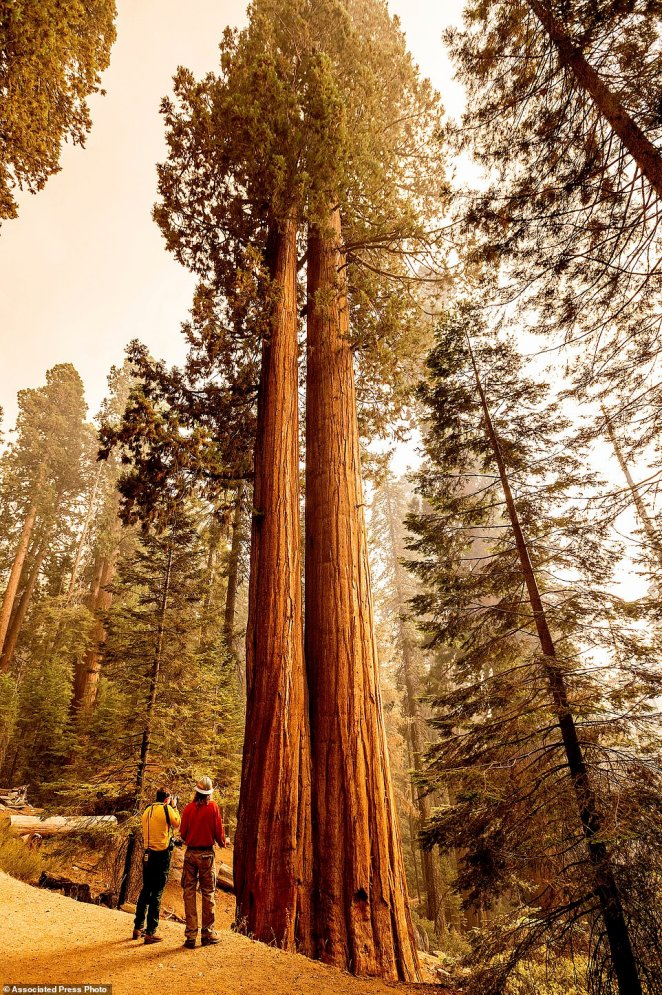Members of the media look at sequoia trees in Lost Grove as the KNP Complex Fire burns