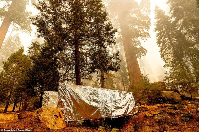 Fire-resistant wrap covers a bridge as the Windy Fire burns in the Trail of 100 Giants