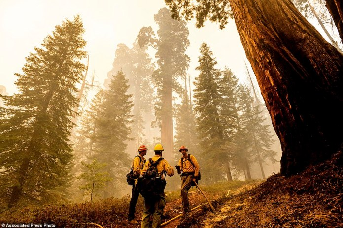 Firefighters discuss tactics while battling the Windy Fire burning in the Trail of 100 Giants grove of Sequoia National Forest