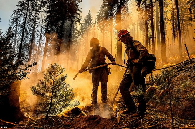 Firefighter Austin Cia sprays water as the Windy Fire burns in the Trail of 100 Giants grove in Sequoia National Forest