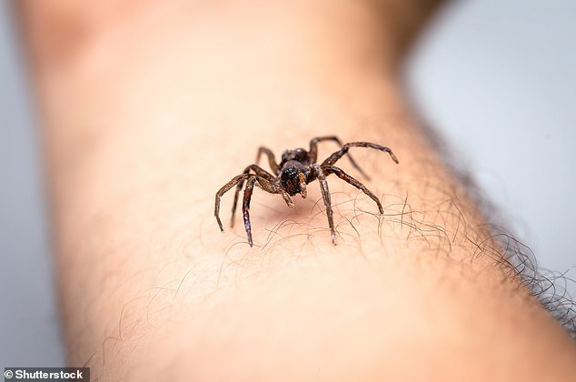 In extreme cases, arachnophobia sufferers may experience panic attacks as a result of their fear.  It is one of the most common phobias affecting people in the UK and around the world