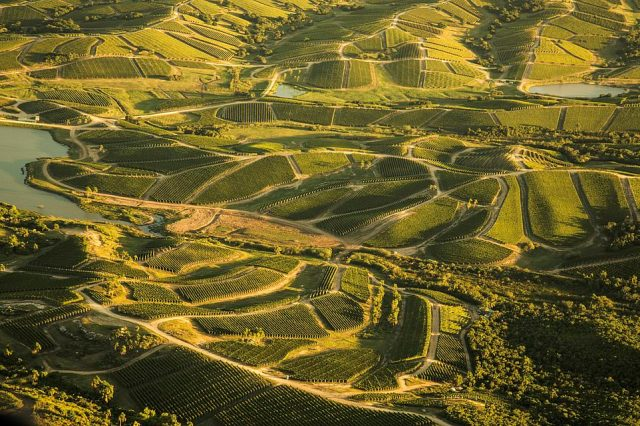 The world's fourth-best vineyard? That'll be Bodega Garzon in Uruguay, pictured