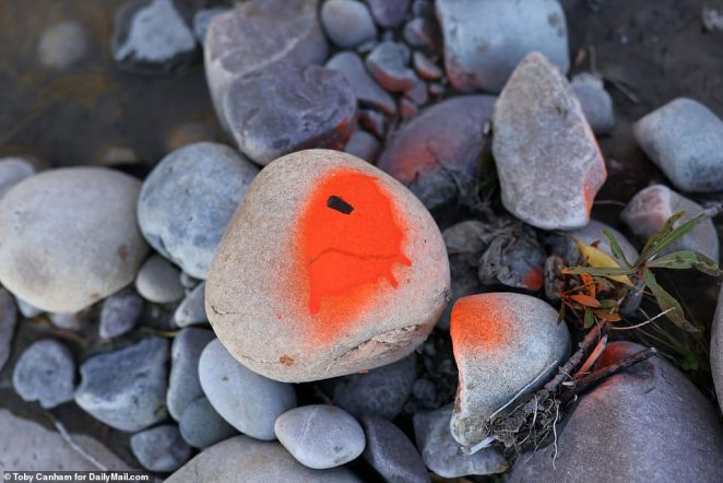 A rock is seen with orange spray paint at the site of Petito's murder. Her body was found Sunday after shes was reported missing on September 11