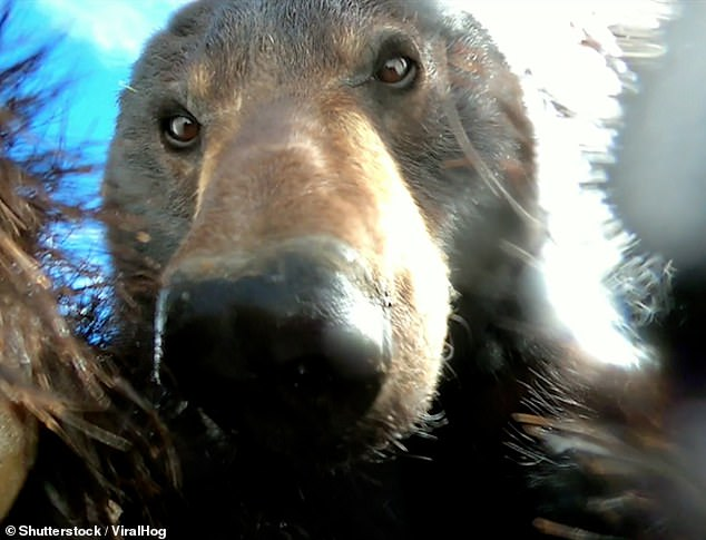 HunterDylan Schilt found the camera four months after the bear dropped the device
