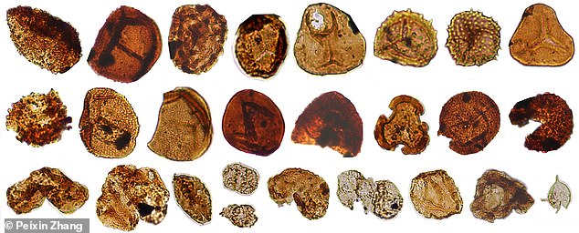Examples pollen, spores, and algae from the Carnian pluvial episode in China that recorded climate and environmental change after massive volcanism