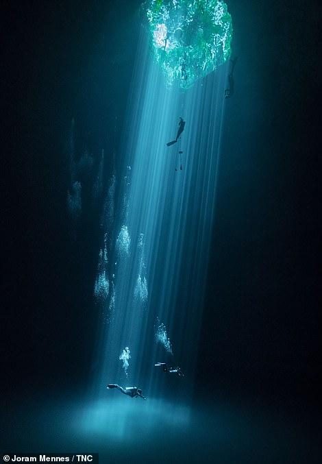 Snapped by Joram Mennes, this photograph claimed second place in the Water category. Mennes took the photo in his native Mexico in a fresh water mass known locally as the Cenotes. The striking image shows 'three levels of leisure', the photographer explains, depicting 'swimmers, freedivers and divers enjoy their respective sport and recreational activities'