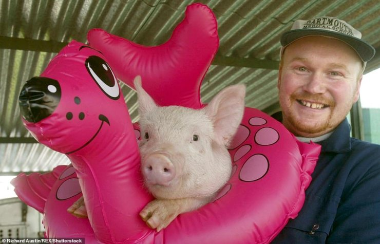 Andrew Freemantle (pictured), a pig farmer in Exeter, Devon, said the backlog threatened farms because animals grow too big for slaughter, which hits how much they are worth