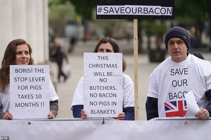 The National Pig Association (NPA) has revealed that 120,000 to 150,000 pigs may have to be killed in the coming weeks