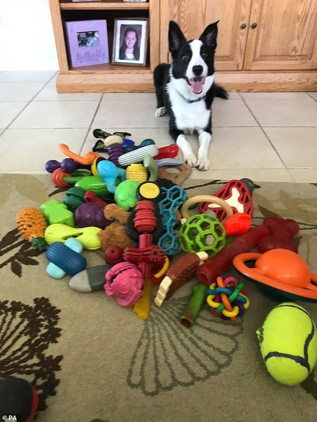 Squall at home with toys.  The Hungarian team spent more than two years around the world searching for dogs that had learned the names of their toys – finding only six