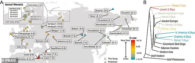 New research, led by the University of Copenhagen, analyzed DNA from the remains of 49 Siberian dogs and found that some mixed with other dog populations from the Eurasian Steppes, the Near East and Europe.  Map showing the places where the remains were found