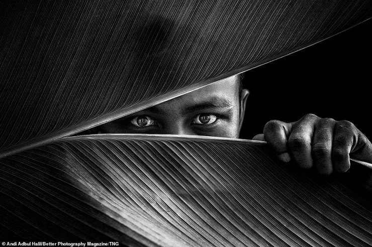 Andi Adbul Halil also triumphed in the Emotive Portraits categories with a capture of a person hiding behind a palm leaf titled 'Let me see the world!'