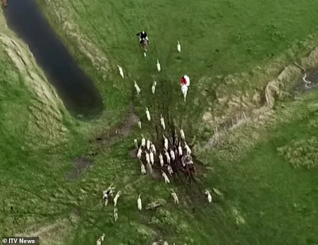 , Undercover footage shows Beaufort Hunt hounds shot dead at kennels, The Today News USA