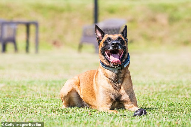 , Yowie Bay, Sydney: Dog tied to block of CEMENT and dumped in a river as cops charge man with torture, The Today News USA