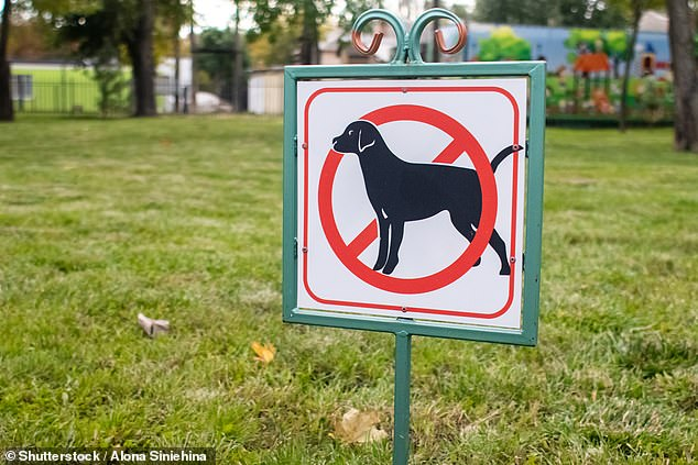 The Moyne Shire council is considering banning dogs, scooters and skateboards from the Port Fairy CBD during the busy summer months