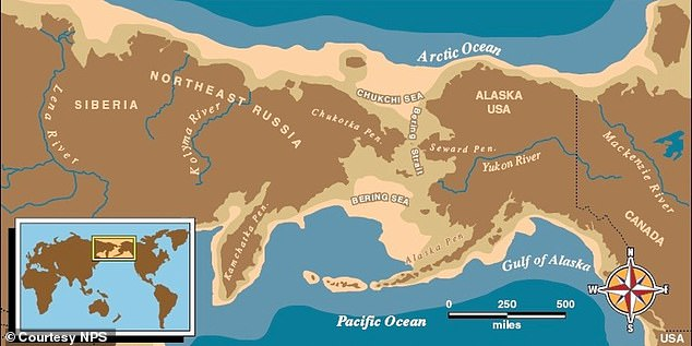 A separate study released in January revealed the time when dogs first came to America.  Research has shown that the first people to arrive in the Americas came about 15,000 years ago – and they brought their own domesticated dogs.  Map showing the Bering Strait which was used by early humans to arrive in the Americas