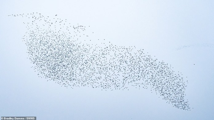 Hundreds of birds can grumble like these knotweeds that flock to our shores every year between August and May.