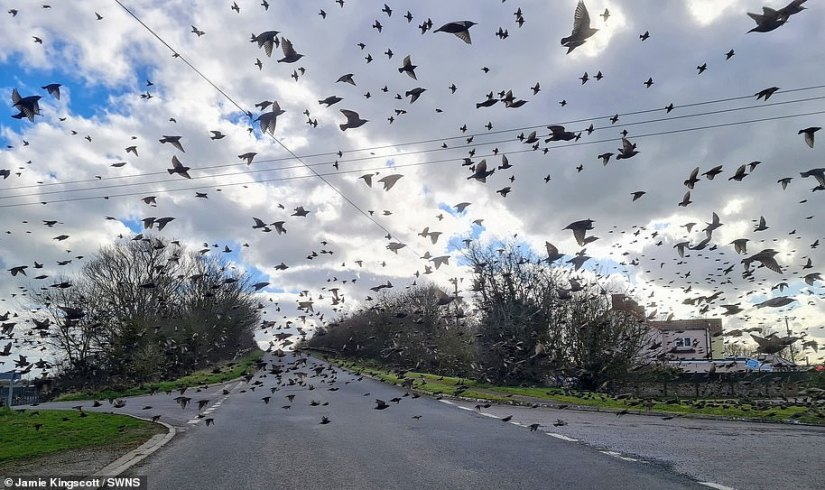 This stunning photo captures thousands of starlings in a murmuration as they surrounded a man's car as part of his work as an ecologist