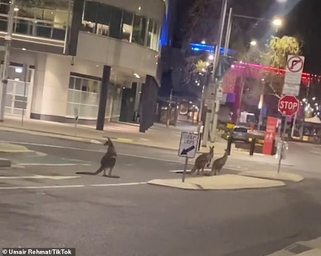 A mob of Kangaroos have taken over Canberra's Civic Centre (pictured) while residents remain in lockdown until midnight Thursday
