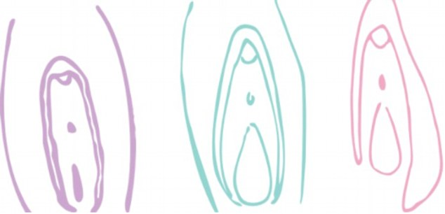 Illustrations demonstrate normal changes in the appearance of different women's vaginas