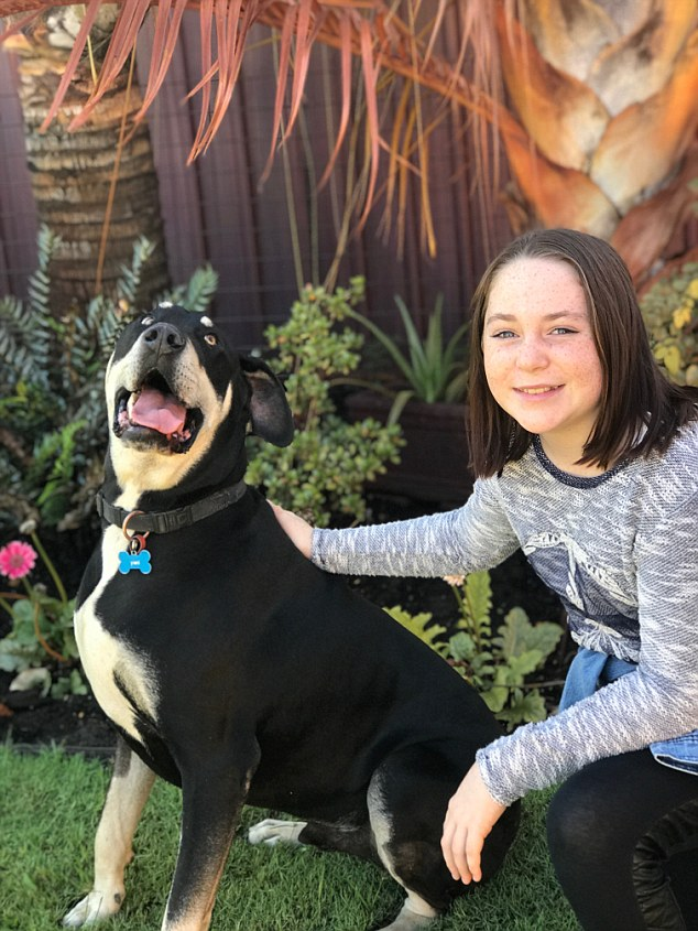 Maya, who has grown up to be strong and resilient, still remembers ever moment of the dog attack - her father believes dangerous breeds bred for hunting should be banned