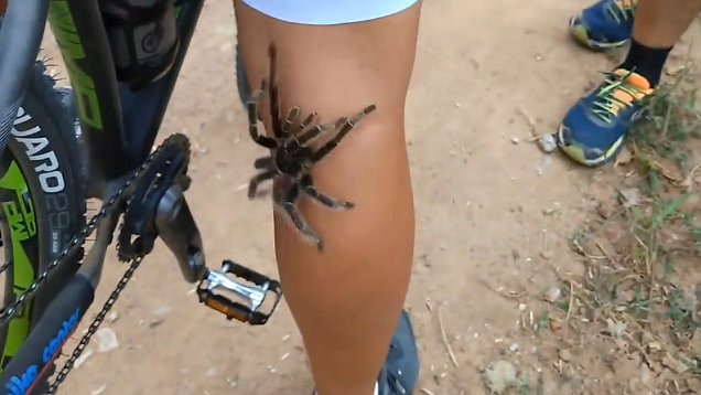 Video Giant Tarantula Climbs Up Cyclists Leg In Terrifying Video Daily Mail Online