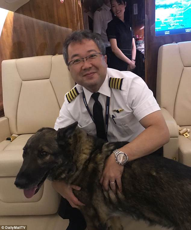 High-flying doggy: Irgo, the 10-year-old German Shepherd is seen on his 6,000 mile journey home after he was accidentally put on a flight to Japan. He was returned by a private flight which went first to Hong Kong and then to