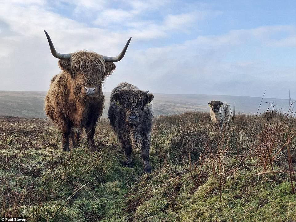 British snapper Paul Steven won theOn the Phone (in aid of Action Against Hunger) prize for snapping this beautiful picture of Highland cows on Exmoor in Somerset