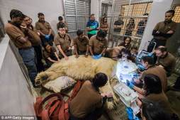 Singapore has released pictures showing the last moments of polar bear Inuka before he passed away. Vets and carers surrounded the bear and comforted him before he was put down to end his suffering from a rapid decline in health