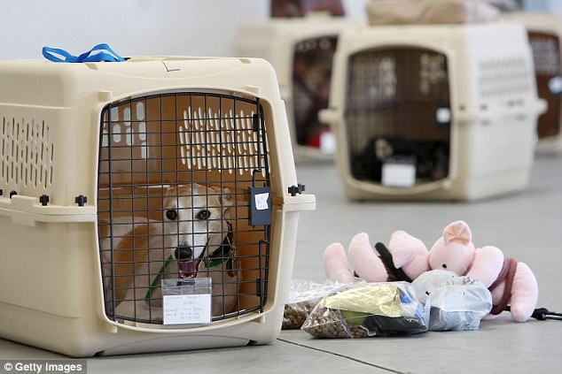 United are now selling pet crates in appropriate sizes for aircraft cabin storage (file image)