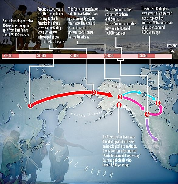 A recent study using ancient DNA (six) suggests humans arrived to North America 25,000 years ago (two) before splitting into three Native American groups (three and four). The DNA came from a girl who belonged to a group called the 'Ancient Beringians'