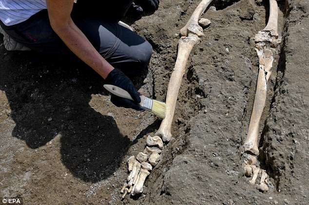 Of the 1,150 bodies recovered by archaeologists at Pompeii, 394 were killed by falling pumice and debris from collapsed buildings