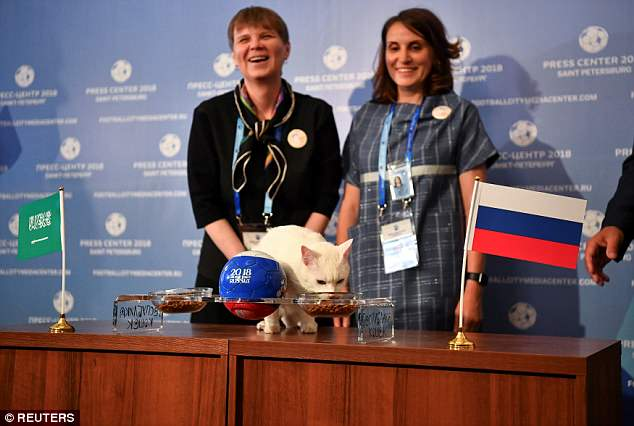 Achilles the cat, from St Petersburg, was asked to choose between two bowls of food featuring the Saudi and Russian flags
