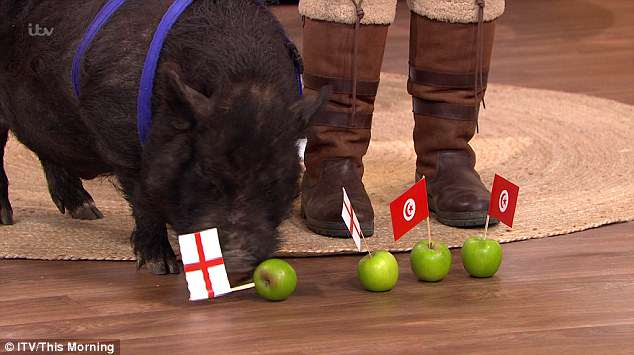 Marcus the Mystical Pig decided that England would win its first World Cup match on This Morning by eating an apple with the St George's Cross in