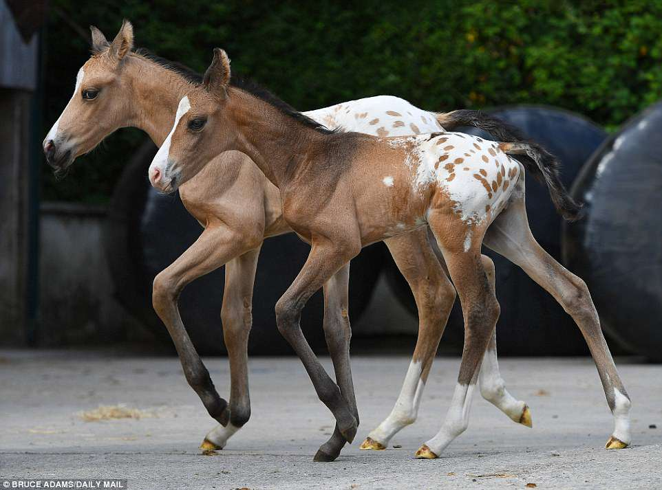 Identical twin horse foals born in Exeter had 10000 to 1