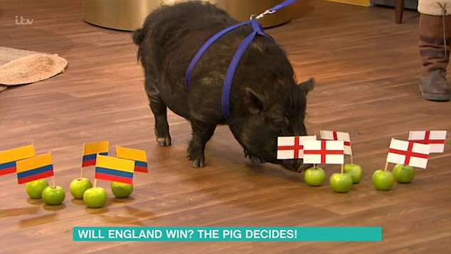 Fleeing: The TV host, 37, frantically ran off set on Tuesday's episode of This Morning following the unexpected actions of the pig who went on to show off its supernatural powers