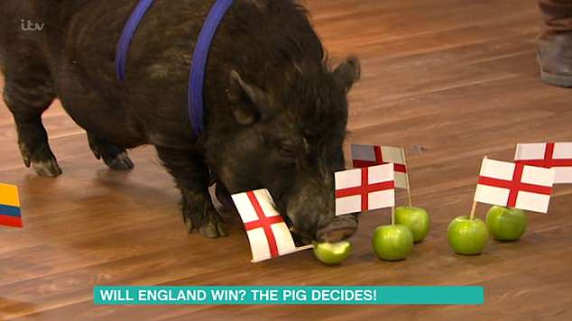 Psychic: The segment continued to take place with the pig sussing out which apples he went for