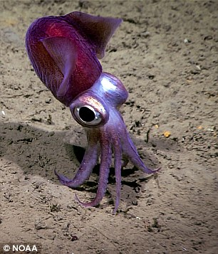 Another standout was the strange but adorable ¿dumpling squid,¿ which is actually considered to be a modified cuttlefish