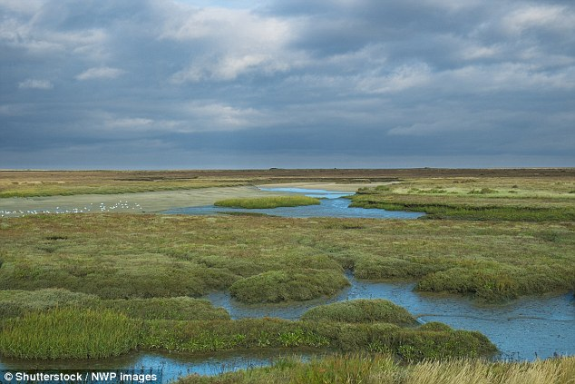 Marshlands, like this one in Norfolk, could start to disappear in a little over 20 years due to rapid rises in sea levels. Studying samples from sediments, experts have tracked sea levels over the past 10,000 years to study how changes have affected salt marshes