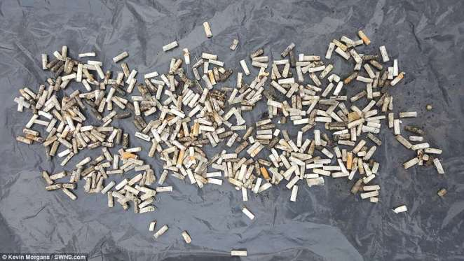 With currents reaching Svalbard from both the Atlantic and Siberia, debris can arrive from far away.  Pictured are532 cigarette ends collected from an Arctic beach in Svalbard