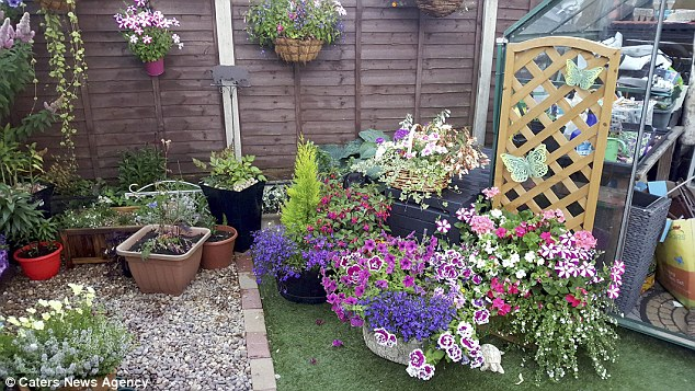 Mike Simcox, 37, captured a picture of his dog Eddie hiding in the garden - but can you spot the pooch?