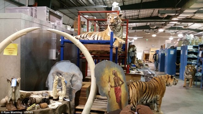 The repository houses 1.3million items that they use for educating on the expanse of the illegal wildlife trade across the globe